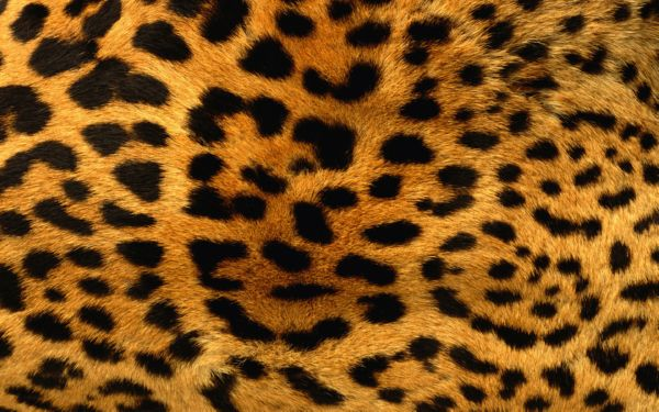 leopard-skin-pattern-backgrounds-pictures